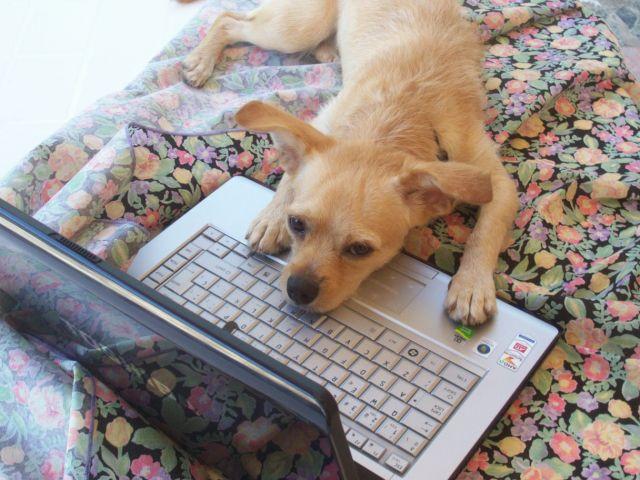 Wico envia su foto a La Voz Digital