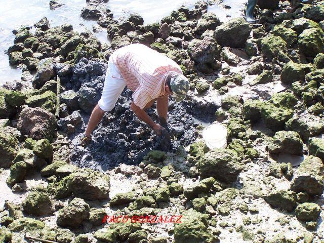 Mariscador en el Puerto