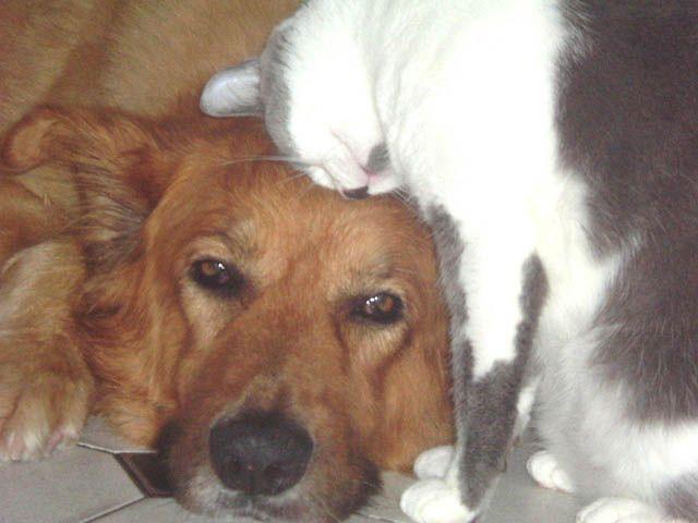 Yaki, gracias por tanta paciencia como has tenido siempre con nosotros, los gatos de la familia.