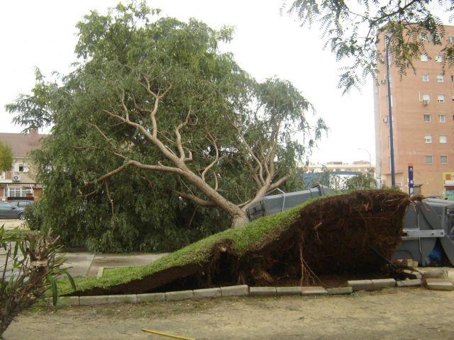 Despues de las lluvias y el viento ¿que nos queda?