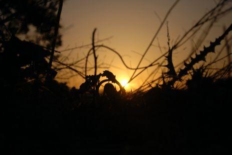 Sigamos dándole la bienvenida al sol, a cada amanecer.