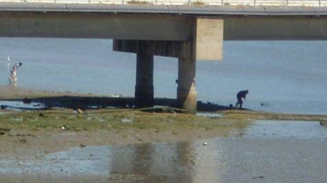 mariscando bajo el puente