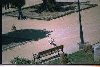 Perros sueltos en el Parque de Varela