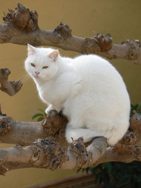 un peaso gato
