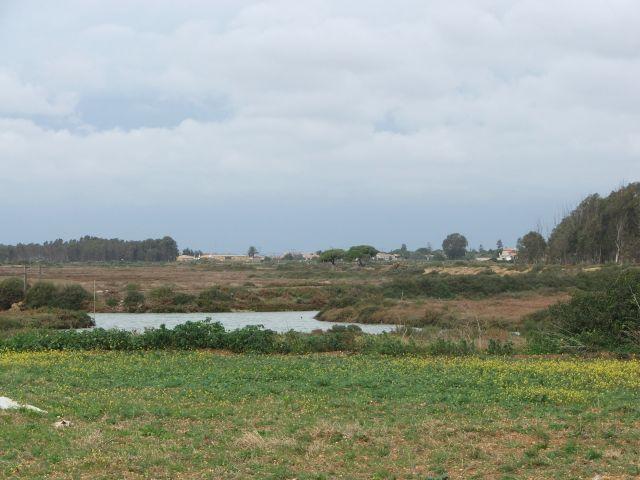 Chiclana, Los Gallos