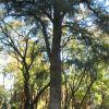 Parques y monumentos de Jerez