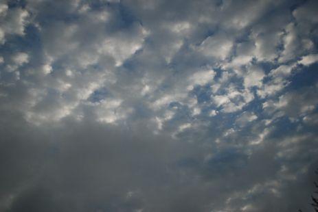 La miro para despedirse y se alejó, con la luz del cielo fue a volar