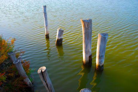 Algas en suspensión