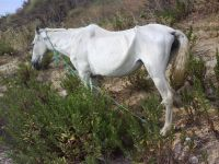 caballo estado salud lamentable