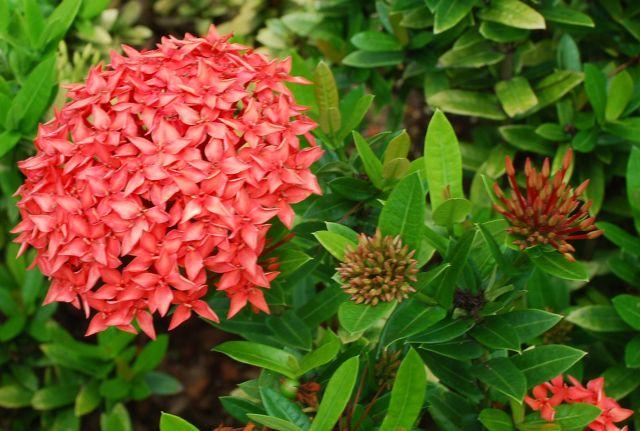 Flora en Jamaica