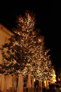 Crear y decorar un árbol de navidad.