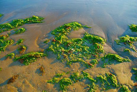 Huellas de Marea, Valdelagrana
