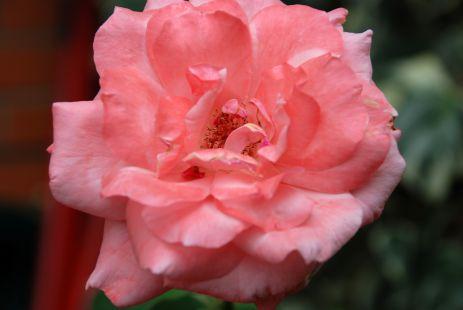 Flores en mi jardin