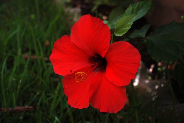 Flores en mi jardín