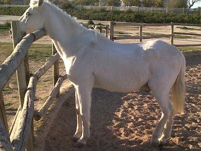 veraneando un lindo caballo.