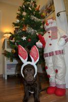 Maya te desea: Feliz Navidad!!