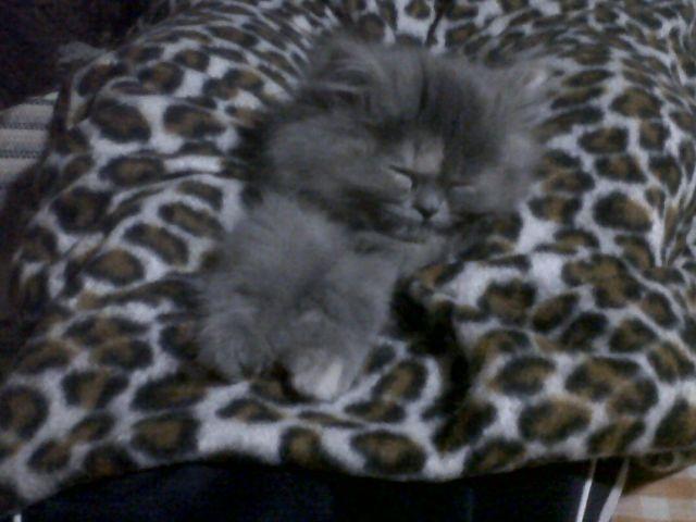 Dormida.