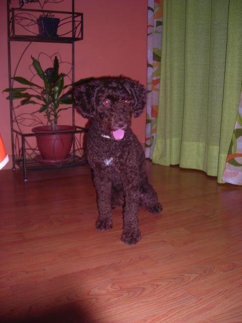 Lola con su primer pelado.