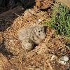 El Vuelo de las Gaviotas 16-05-2013 (Naciendo los Polluelos)