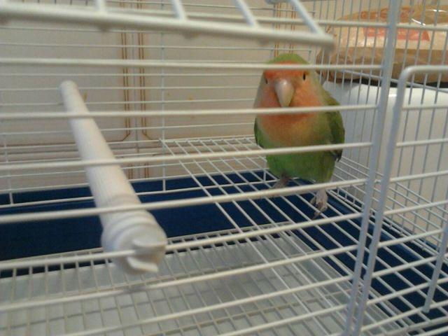 Pájaro tropical.