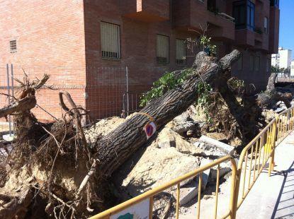 Desforestación de Cádiz