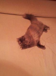 Tana jugando en la cama.