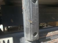 insecto en forma de palo