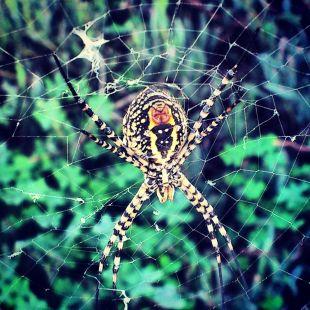 La araña de la salina de San Judas