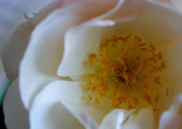 Flor blanca.