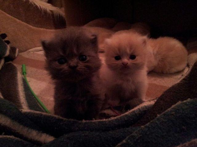 Las crías de Tana.