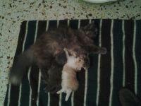 Tana y sus crías