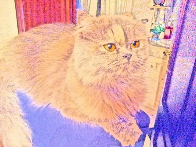 Un dibujo de mi gata Tana.